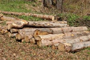 nelegální těžba dřeva díky vysokých finančním ziskům
