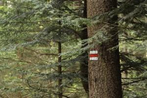 Čínská poptávka po dřevu ničí lesy v Rusku a Zambii