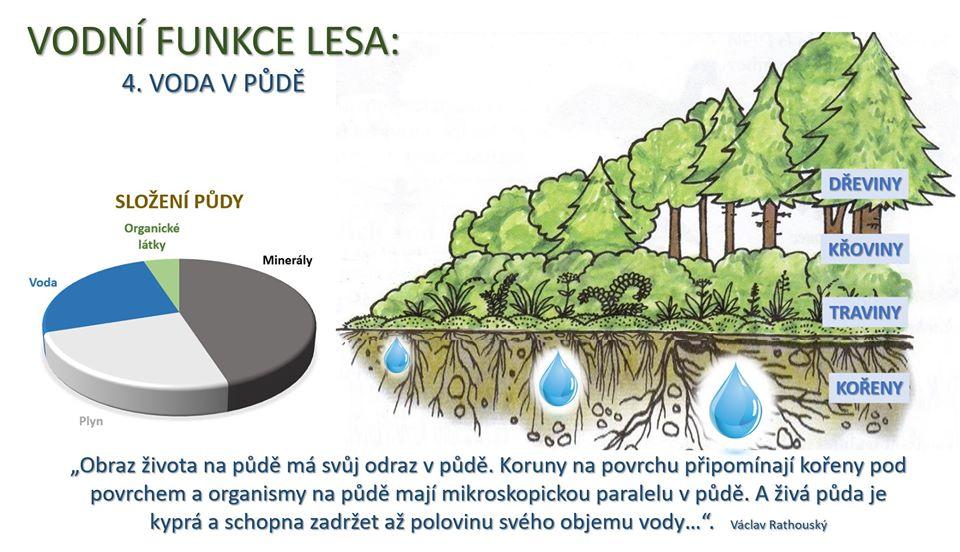 funkce lesa 4